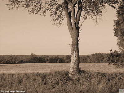 Elkton Photograph - Auto Grave by Shannon Freeman