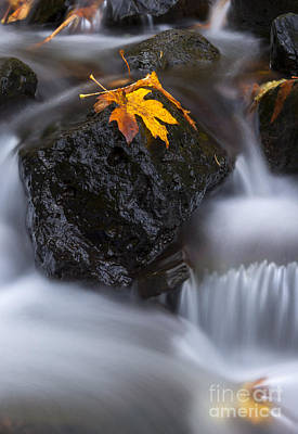 Waterfall Photograph - Autumn Above And Below by Mike Dawson