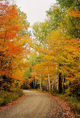 Autumn Acadia Pathway Original by Lena Hatch