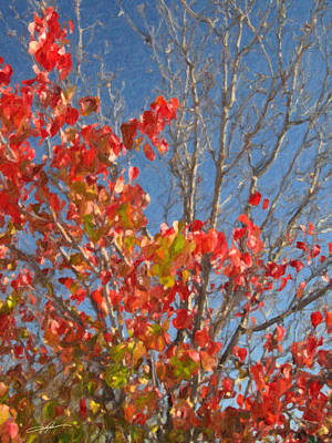 Red Leaf Digital Art - Autumn Against A Bright Sky by Dale Jackson
