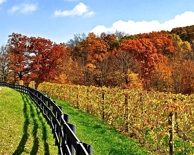 Fall Wine Grapes Photograph - Autumn Amish Vineyard by Frozen in Time Fine Art Photography