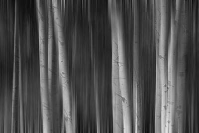 Icm Photograph - Autumn Aspen Trees Dreaming Bw by James BO  Insogna