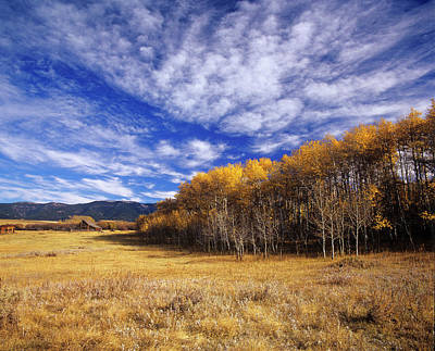 Autumn Aspens And Old Barn On Ranchland Print by Chuck Haney