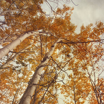 Baum Photograph - Autumn Aspens by Priska Wettstein