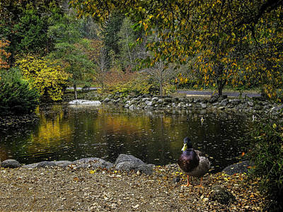 Autumn At Lithia Park Pond Print by Diane Schuster