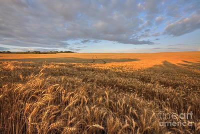 Alberta Prairie Landscape Photograph - Autumn Bounty by Dan Jurak