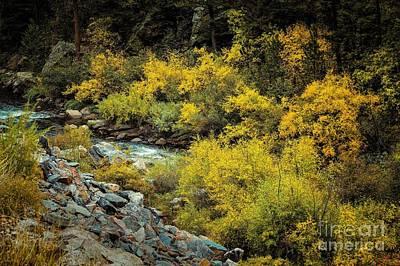 Autumn Bouquet Print by Jon Burch Photography