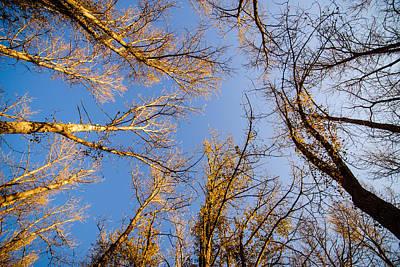 Autumn Canopy - Kittitas County - Washington - October 2013 Print by Steve G Bisig