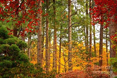 Autumn Landscape Photograph - Autumn Canvas by Carol Groenen