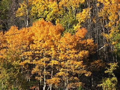Autumn Color At The Continental Divide Print by Kae Cheatham