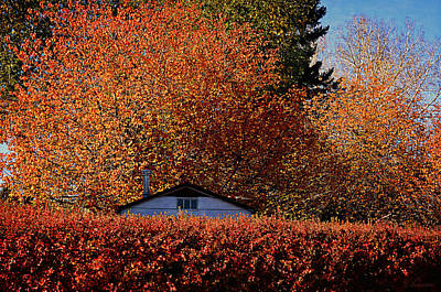 Autumn Colors Print by Maria Angelica Maira
