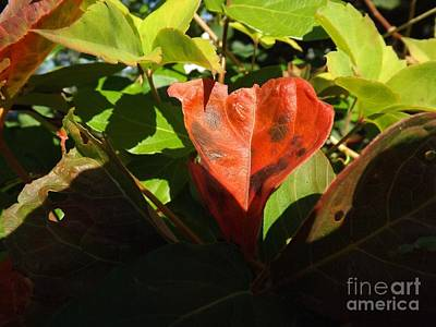 Meditative Photograph - Autumn Colors by Robyn King