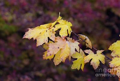 Autumn Contrast Original by Mike  Dawson