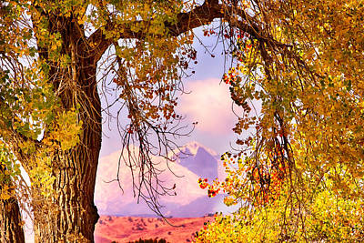 Gold Photograph - Autumn Cottonwood Twin Peaks View by James BO  Insogna