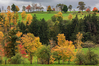 Cows Photograph - Autumn Country by Bill Wakeley