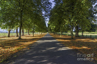Autumn Drive Print by Ian Mitchell