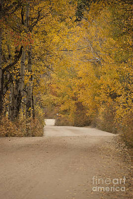 Curving Road Photograph - Autumn Drive by Juli Scalzi