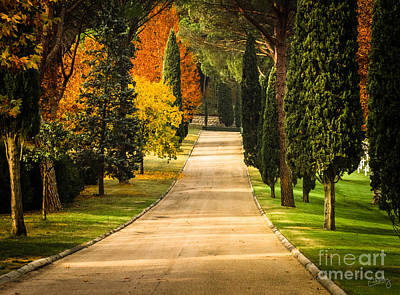 Autumn Drive Print by Prints of Italy
