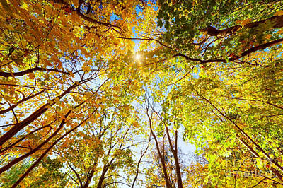 Nature Photograph - Autumn Fall Trees by Michal Bednarek