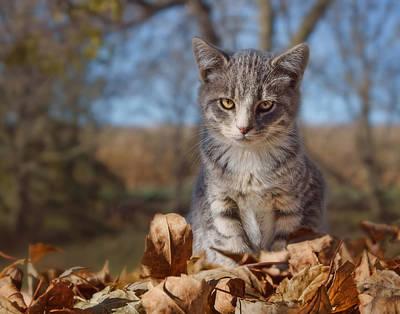 Gray Tabby Photograph - Autumn Farm Cat #2 - Horizontal by Nikolyn McDonald