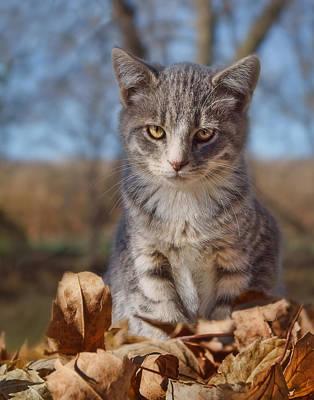 Gray Tabby Photograph - Autumn Farm Cat - 2 by Nikolyn McDonald