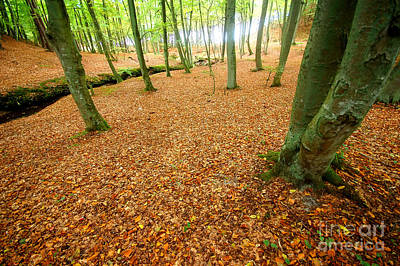 Setting Photograph - Autumn Forest by Michal Bednarek