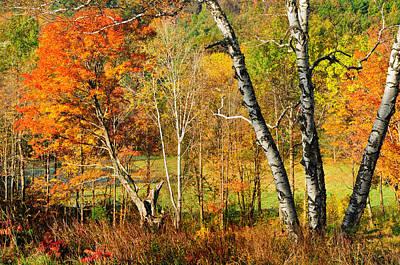 Autumn Forest Scene - Litchfield Hills Print by Thomas Schoeller