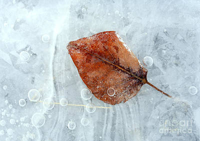 Ice Photograph - Autumn Frozen by Mike  Dawson