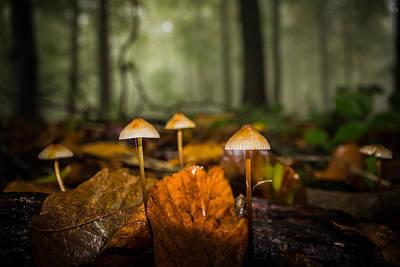 Autumn Fungus Print by Ian Hufton