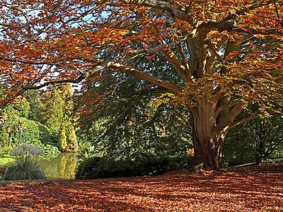 Autumn Glow Print by Gill Billington