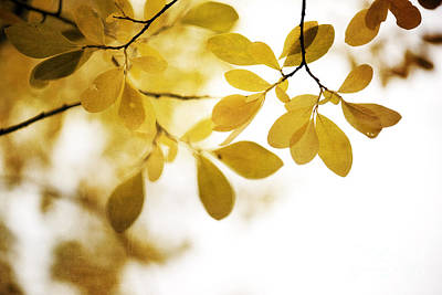 Gold Photograph - Autumn Gold by Priska Wettstein