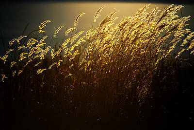 Autumn Photograph - Autumn Gold by Ron Day