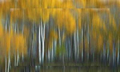 Autumn In Aspen Print by Steve K