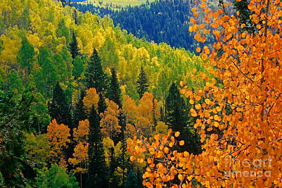 Autumn In Colorado Print by Richard and Ellen Thane