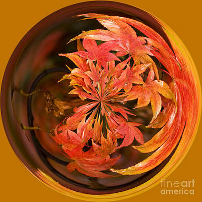 Manipulation Photograph - Autumn In The Round by Anne Gilbert