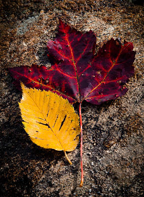 Of Autumn Photograph - Autumn In The Spotlight by David Patterson