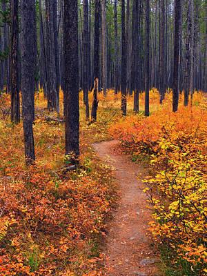 Autumn In Yellowstone Print by Raymond Salani III