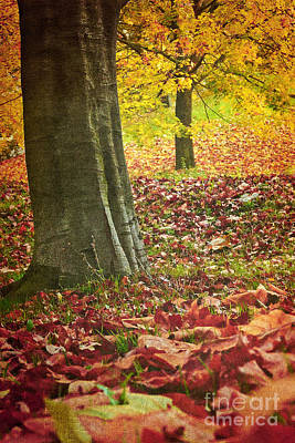 Autumn Iv Print by Angela Doelling AD DESIGN Photo and PhotoArt