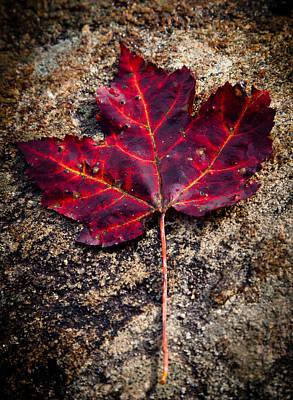 Of Autumn Photograph - Autumn Leaf by David Patterson