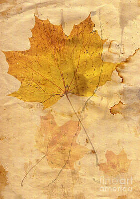Abstract Composite Digital Art - Autumn Leaf In Grunge Style by Michal Boubin