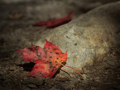 New Hampshire Autumn Photograph - Autumn Leaf Project by Chris Fletcher