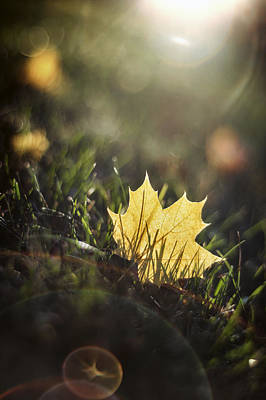 Glare Photograph - Autumn Leaf Sunset by Scott Norris