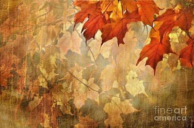 Photograph - Autumn Leaves  by Andrea Kollo