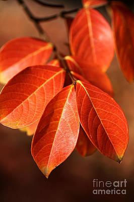 Autumn Leaves Print by Joy Watson