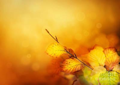 Mythja Photograph - Autumn Leaves by Mythja  Photography