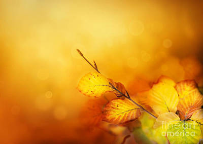 Autumn Leaves Print by Mythja  Photography