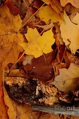 Autumn Leaves Of Yellow And Brown Print by ImagesAsArt Photos And Graphics