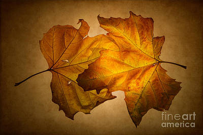 Autumn Leaves On Gold Print by Ann Garrett