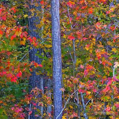 Autumn Leaves Print by Scott Cameron