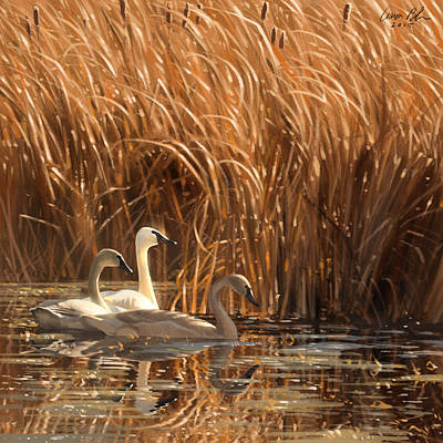 Marshes Digital Art - Autumn Light- Trumpeter Swans by Aaron Blaise